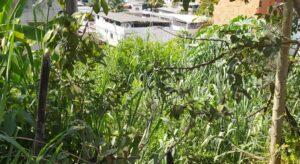 Morador que contraiu dengue reclama do mato alto em terreno do Bela Vista em Leopoldina